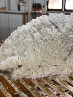Some of their beautiful wool